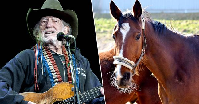 Willie Nelson saved 70 horses from the slaughterhouse