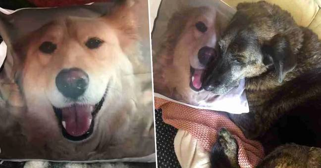 dog cuddling pillow with picture of his brother on