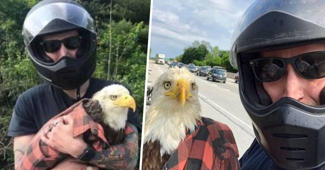Biker Spots Injured Bald Eagle Caught In Traffic And Saves Its Life