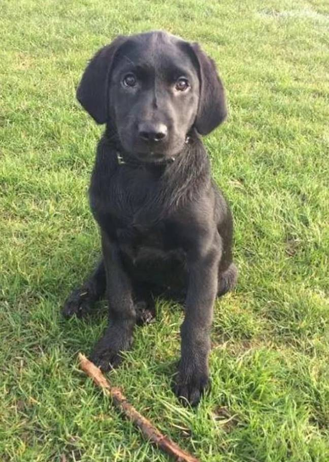 shadow the puppy