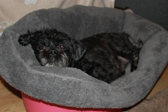 Dog up for adoption at Oldies Club