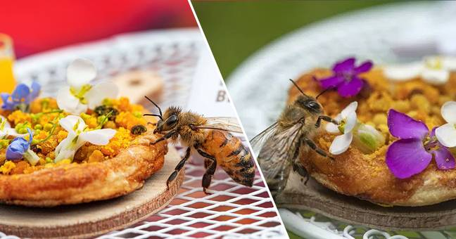 Tiny Pizzas Made Just For Bees Called Beezas Are Summer's Best Recipe
