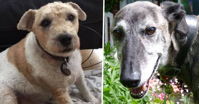 dogs up for adoption at Oldies Club