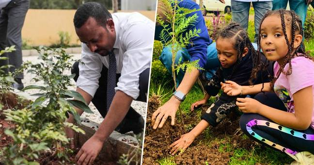 Ethiopia 350 Million Trees planted In One Day