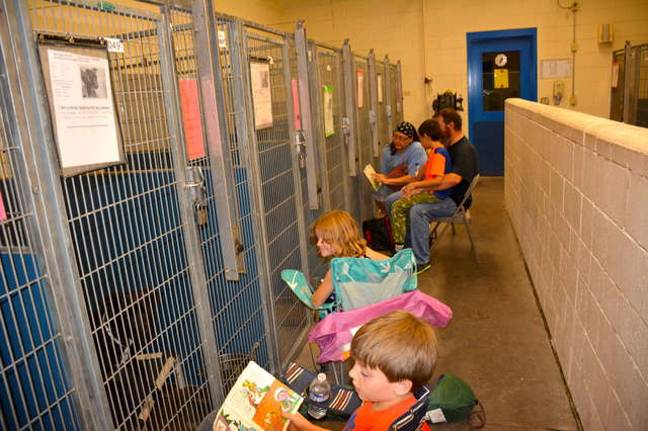 Americans Skip 4th July Fireworks To Look After Scared Shelter Animals
