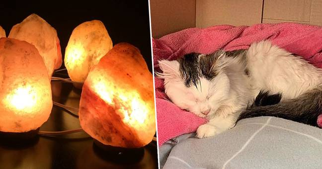 Vets Issue Warning After Pet Nearly Dies From Licking Himalayan Salt Lamp