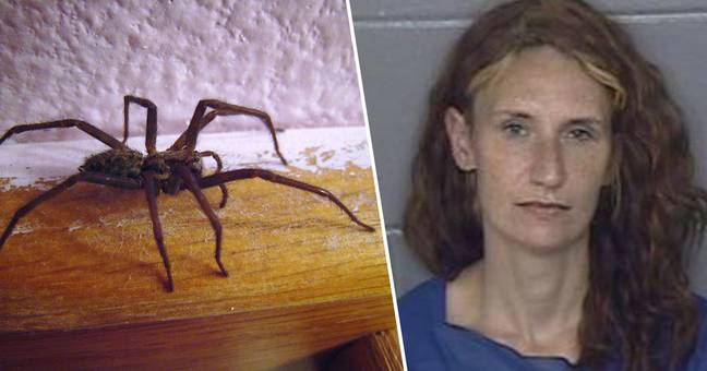 woman who set house on fire after finding spider