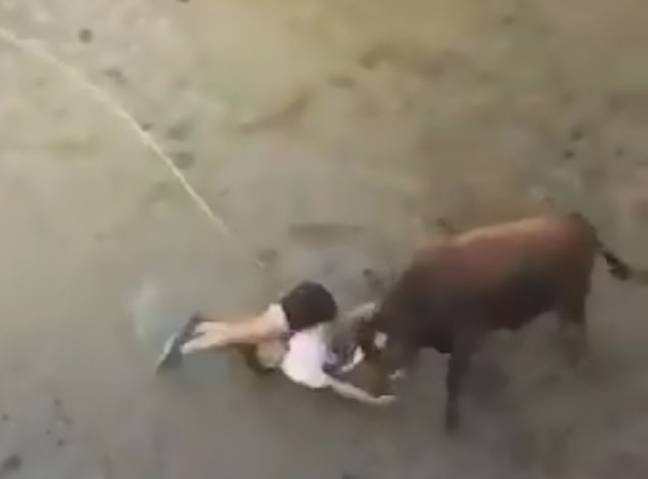 Bull Tosses Man Into Air Before Dragging Him Round Pen At Festival