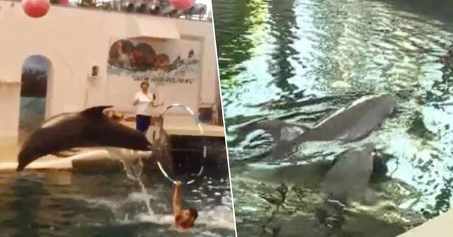 Baby Dolphin 'Dies Mid Performance' At Water Park After Being 'Overworked'
