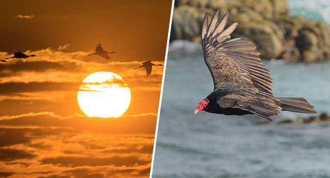 Nearly 3 billion birds vanished from US and Canada in 50 years