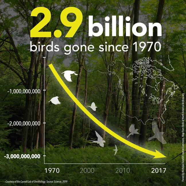 3 billion birds vanished in US and Canada in 50 years