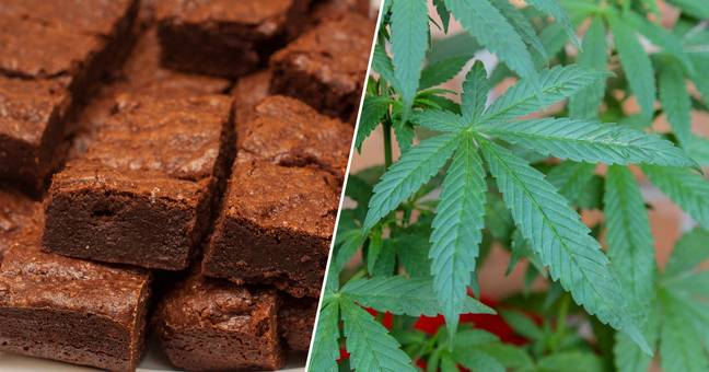 Funeral In Germany Ends On A High As Hash Cake Is Accidentally Served