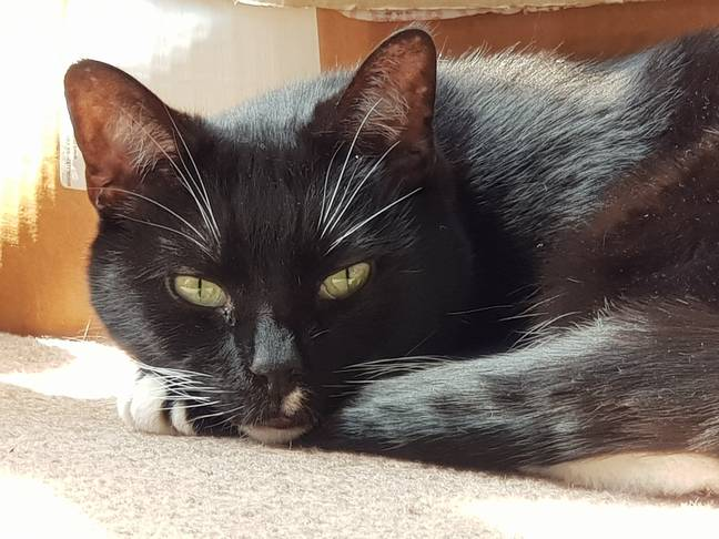 Britain's loneliest cat looking for home before Christmas