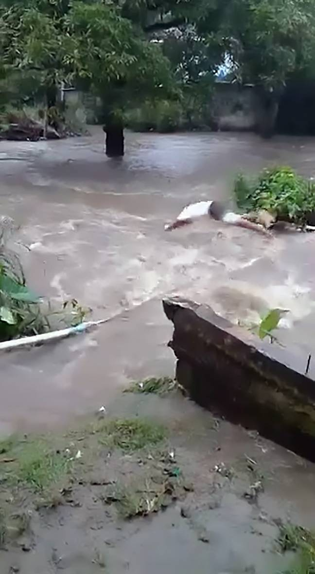 Man diving into river to save pet dog