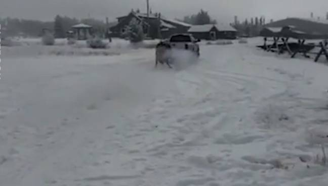 Horse Dragged Along Icy Road 3