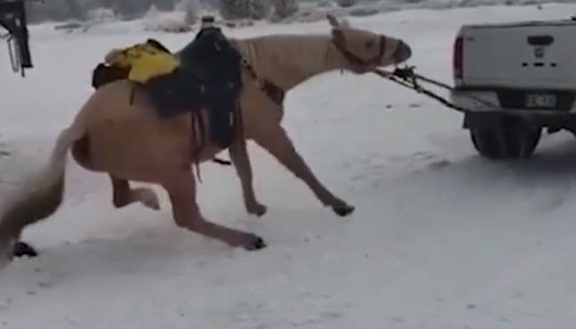 Horse Dragged Along Icy Road