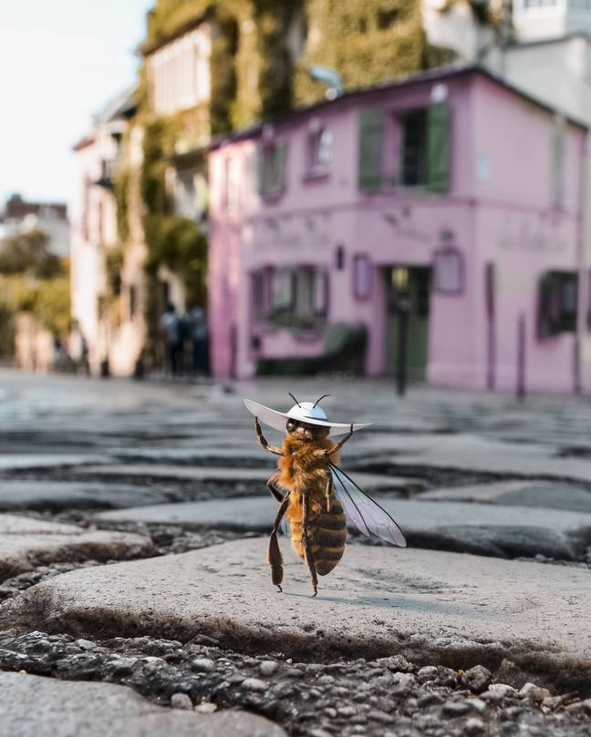 A Bee Has Become An Influencer For A Very Important Reason