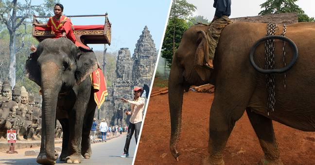 Elephant rides to be banned in Cambodia's Angkor park