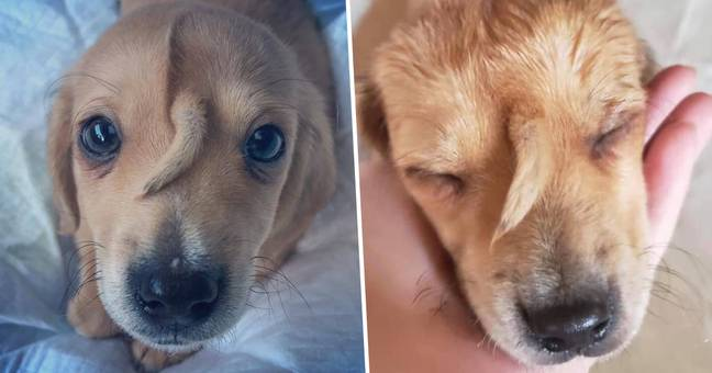 Abandoned 'Unicorn' Puppy With Tail Growing From Head Rescued From Cold