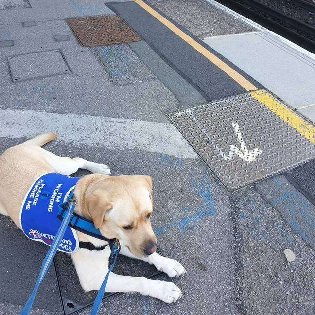 ziggy assistance dog turned away from restaurant