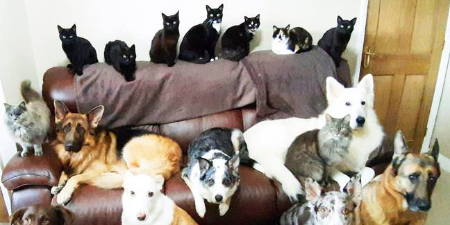 Woman Miraculously Gets All 17 Pets To Sit Still For Photo