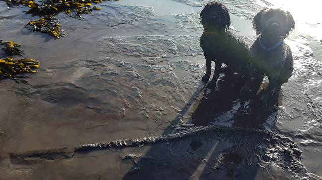 Dog pictured with ancient skeleton discovered on British beach