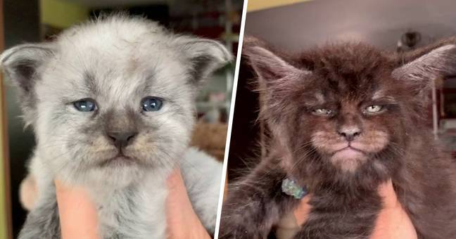 Breeder Shows Off New Litter Of Kittens With Spooky 'Human Faces'