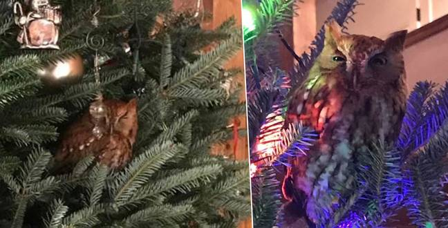 Georgia Family Shocked To Find An Owl Living In Their Christmas Tree