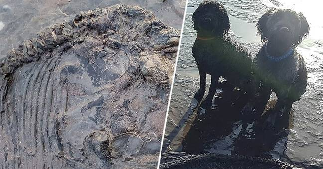 Dogs Discover 150 Million-Year-Old Jurassic Skeleton On British Beach