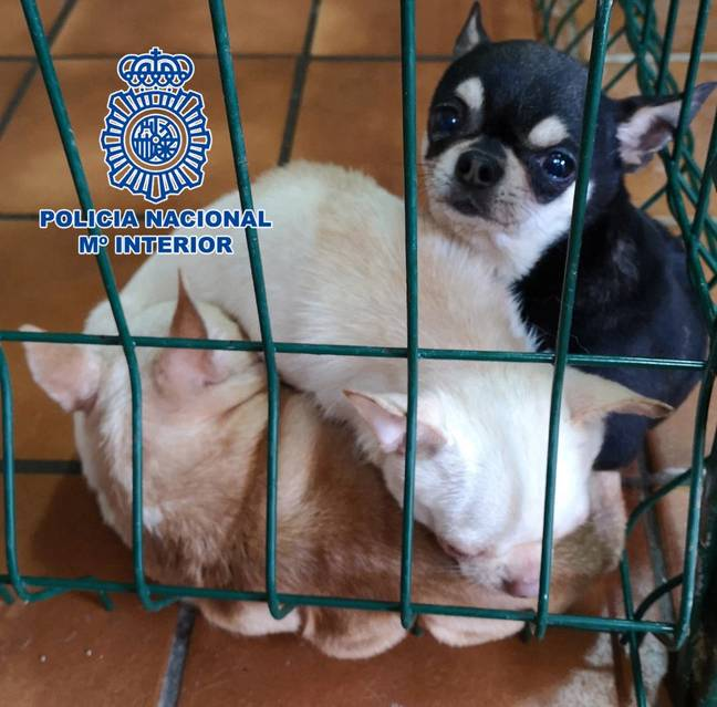 Dogs Rescued From Puppy Farm Madrid