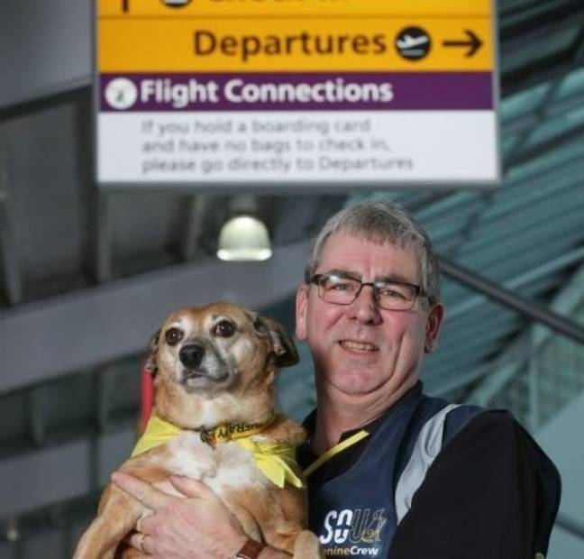 Therapy Dogs UK Airport 3