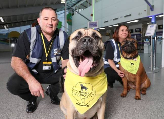 Therapy Dogs UK Airport 4