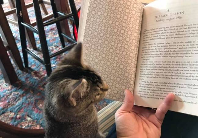 Book shop in Canada has cats that you can adopt