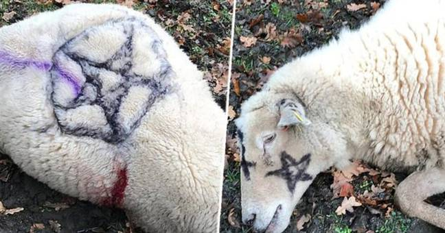 Man arrested in connection with Satanic sheep killings