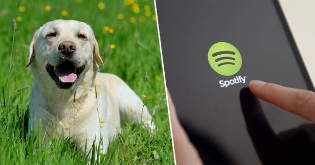 spotify launch new playlist generator for pets