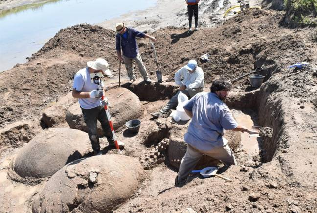 Ancient Armadillo The Size Of A Car Discovered By Farmer