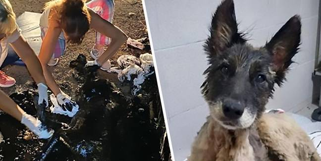 Dog Covered In Tar In Buenos Aires