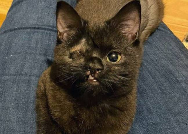 One-eyed kitten looking for forever home