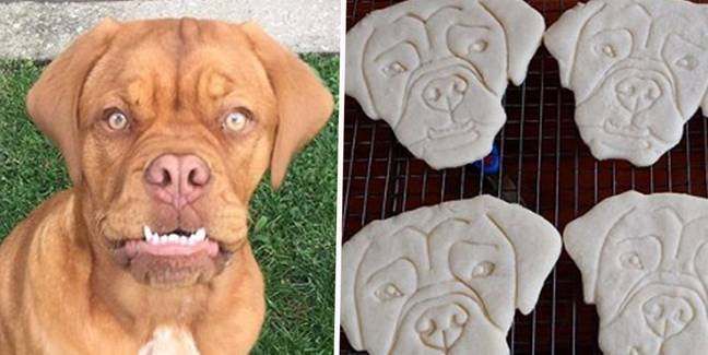 You Can Now Buy Custom Cookie Cutters That Look Like Your Pets