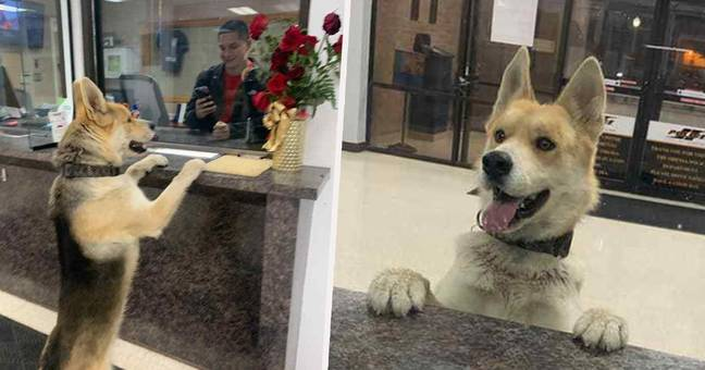 Dog Shows Up At Texan Police Station To 'Report Himself Missing'