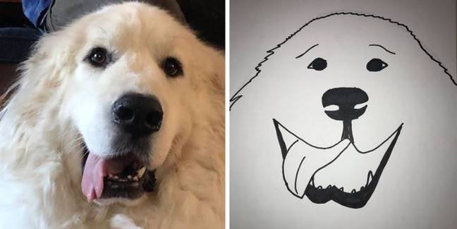 Humane Society creates drawings of pets in exchange for donations