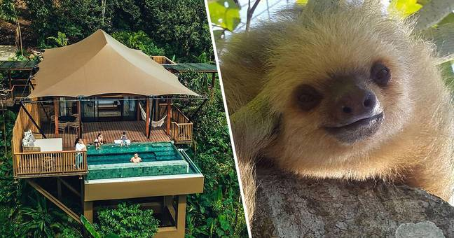 ​You Can Now Stay In The Costa Rican Rainforest With Sloths