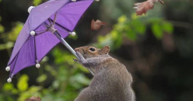 Photographer Who Captured Squirrel Battling Wind With Tiny Umbrella Explains How He Did It