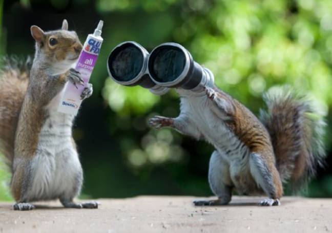 Squirrel holding superglue and another squirrel looking in binoculars