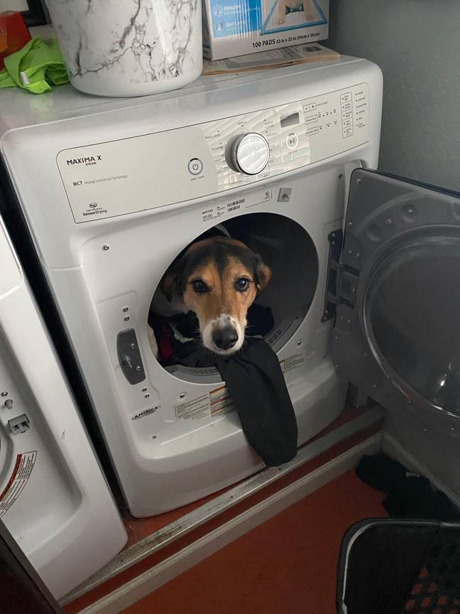 Lyla the dog hanging out in a dryer