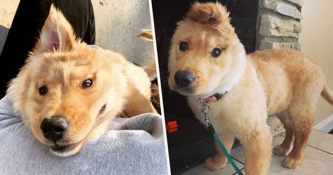 Unicorn Dog Has One Ear In The Middle Of Her Head