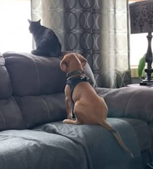 Puppy And Kitten Cuddle Up On Sofa As They Gaze Out Of Garden Window