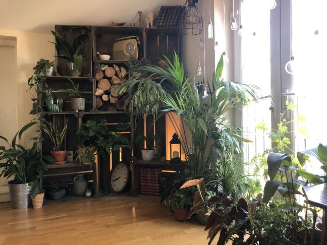 Self-Confessed 'Jungle Boy' Has 1,400 House Plants That Take Him Hours To Water Everyday