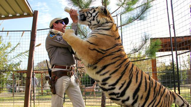 Conservationist Says Tiger King Was 'A Missed Opportunity'