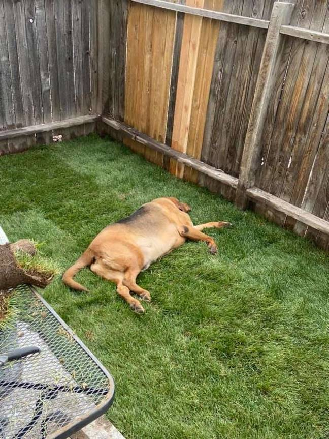 Rescue Dog Who Never Had His Own Garden Built One By Loving Owners